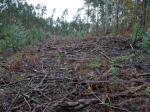 O estado no que queda un monte trala tala de eucaliptos_foto de Ar Ceive, enFacebook