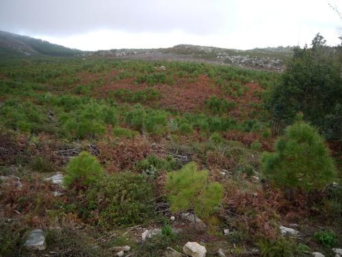 Vistas dende Pedras Negras ata o Outeiro da Charamiza, pasando por Chan de Goa e o rio Miñouva, en zonas afectadas pola construción do parque eólico. (Foto, Cándido Martínez, de Luita Verde).