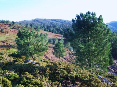 Imaxe do monte comunal de San Xulián dende o Alto do Pornedo.