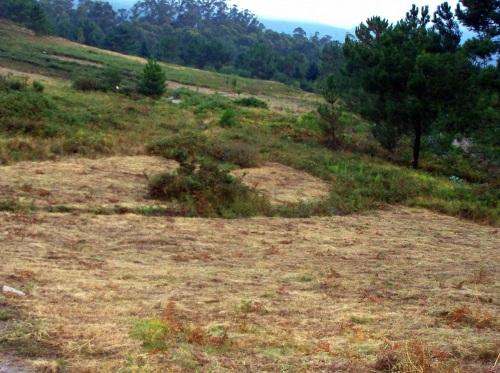 O Alto do Pornedo volve recuperar o uso agrícola.