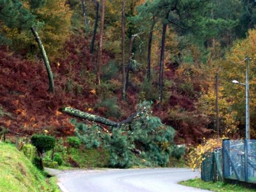 Árbore caída no lugar do Caeiro.