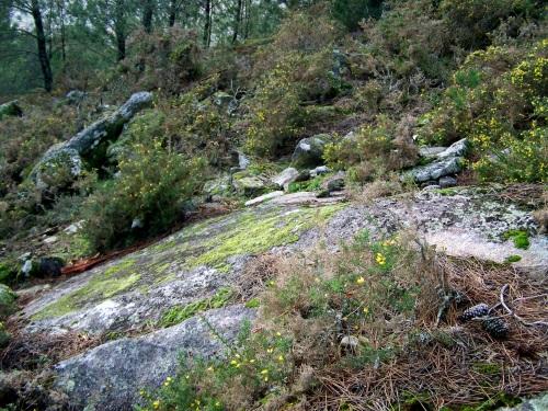 Antiga canteira nas cercanías do Monte Pituco.