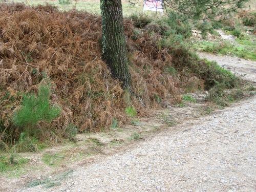Regos atascados de pedras, terra e vexetación acumulada.