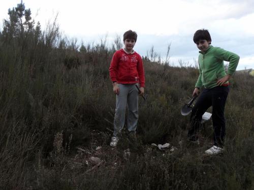 Un carballo no Monte Meda, Alto Támega, Ourense..