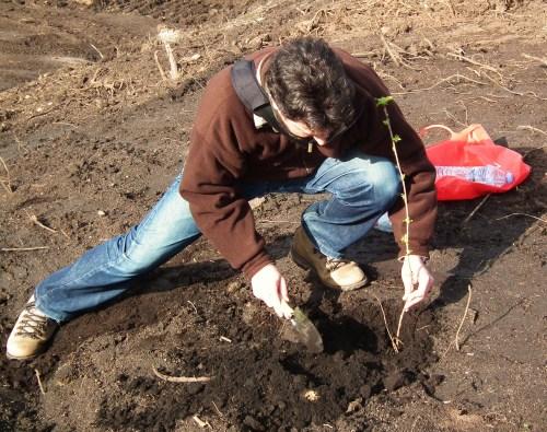 Plantando unha cerdeira no monte veciñal de Salcedo.