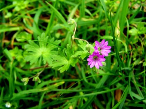 Flora silvestre da Curxeira.