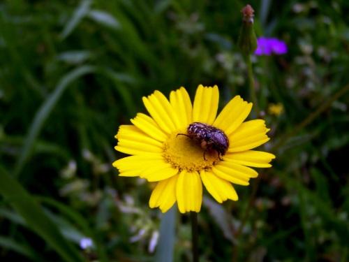 Flora & Fauna das veigas da Curxeira.