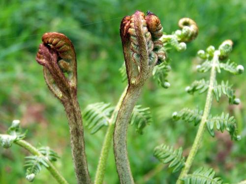Flora primaveral da Curxeira.