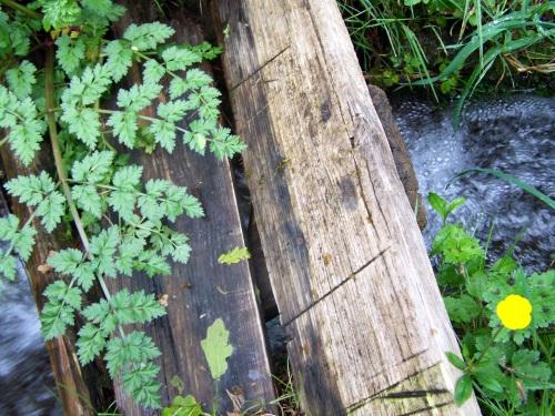 Pasos de madeira para cruzar o regato e acceder ás veigas da Curxeira.