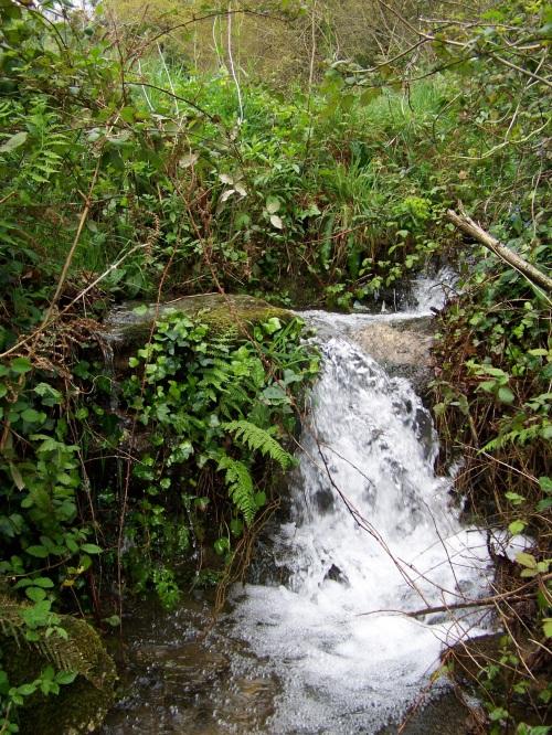 Flora silvestre nas veigas da Curxeira e no regato do Pornedo.