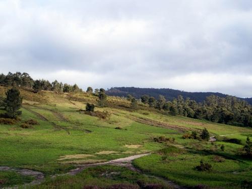 Monte Pornedo, afectado polo proxecto de construcción dun polígono industrial.