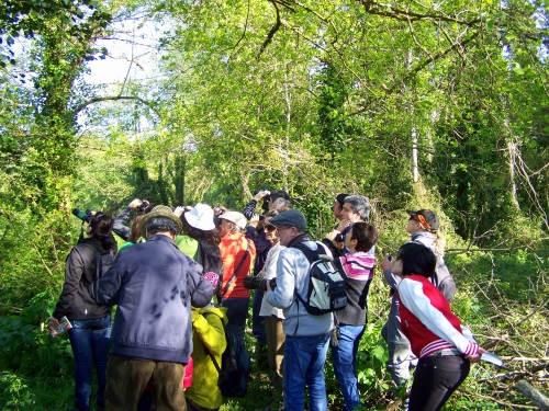Andaina ornitolóxica polo río Gafos organizada por Vaipolorío.