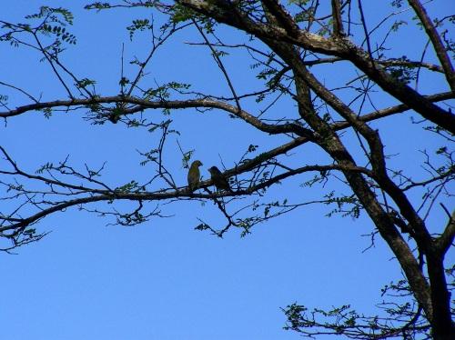 Andaina ornitolóxica polo río Gafos con Vaipolorío.