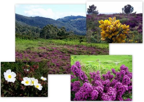 Imaxes da matogueira no Monte Pituco.
