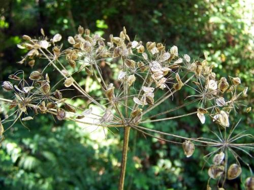 Flora do Gafos.