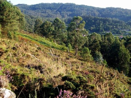 Vista do monte de San Xulián dende os petroglifos de Pinal de Caeiro.