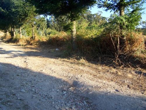 Pista forestal do Monte Pituco, desbrozada a semana pasada.