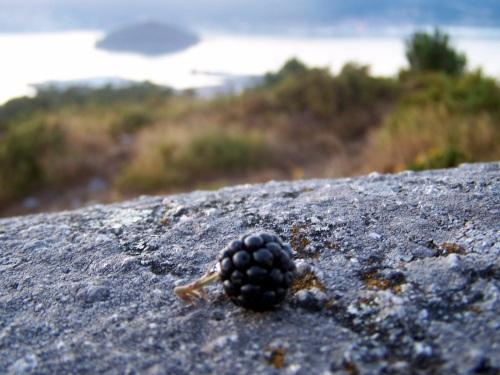 Haberá que esperar a outro ano para ter marmelada de amoras 'made in' Monte Pituco.