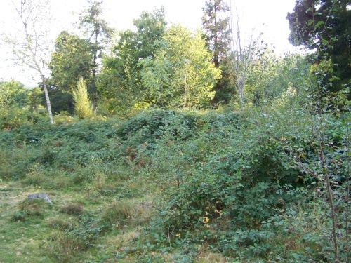 A maleza invade diversos espazos de Castiñeiras.
