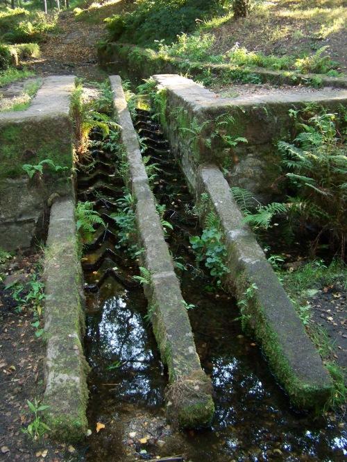 Máis signos da sequía no regato que conduce á lagoa de Castiñeiras.
