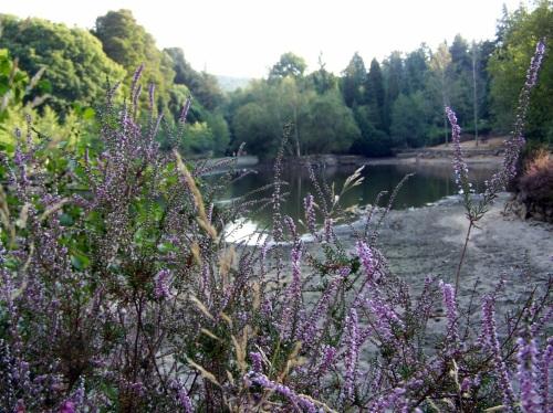 A lagoa de Castiñeiras, en setembro.
