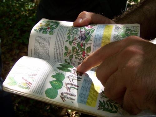 Unha boa guía, complemento indispensable para coñecer a fauna e a flora.