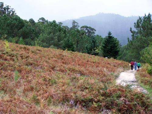 Cazadores, recolectores de cogomelos, sendeiristas... o monte ten que ser un lugar seguro para todos.