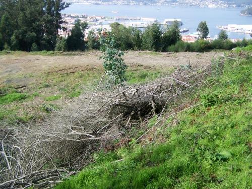 As pólas da poda das árbores feita no verán seguen tiradas no terraplén.