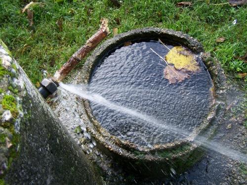 Fuga de auga nunha das fontes da arboreda.