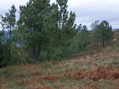 En pleno val do Pornedo máis dunha árbore resultou damnificada pola forza do vento.