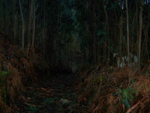 Os sendeiros entre o monte quedaron cubertos de pólas, paus e restos vexetais tralo temporal.