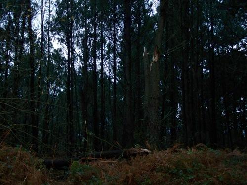 Tal foi a forza do ventoTal foi a intensidade do vento que tronzou árbores de certo grosor.