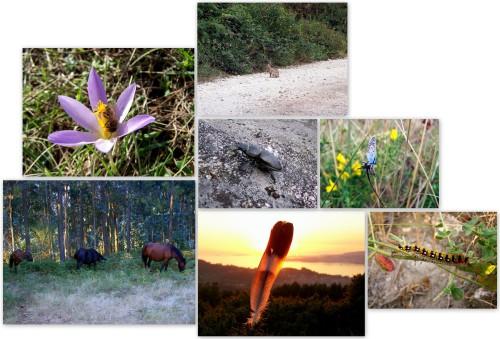 Fauna do Monte Pornedo.