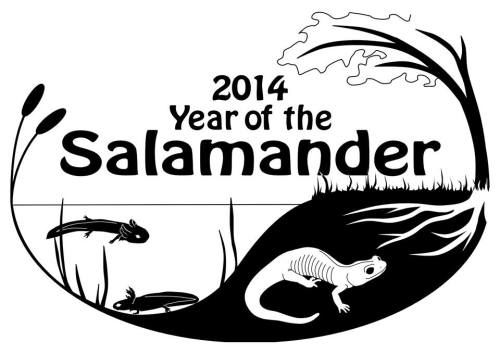 Year of the Salamander 2014.