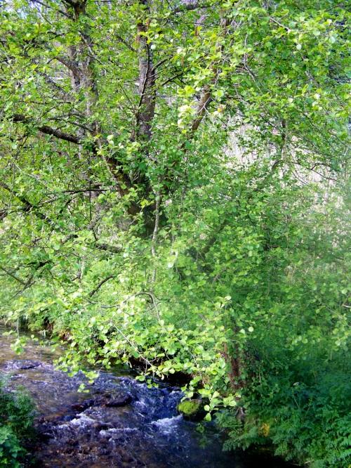 Vexetación fluvial do río Lameira, no Sequelo.