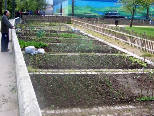 Hortas urbanas no Sequelo.