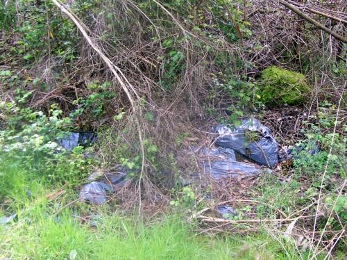 No camiño ata Castiñeiras atopamos varios verquidos ilegais.
