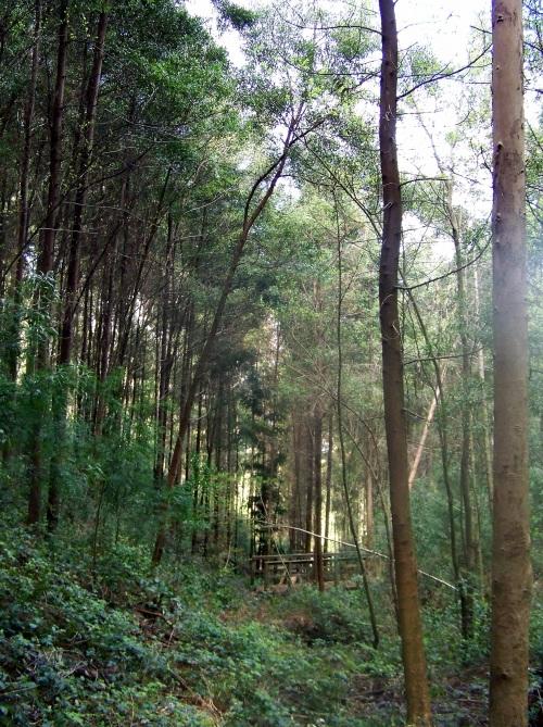 Hacia Castiñeiras seguindo a senda do Lameira.