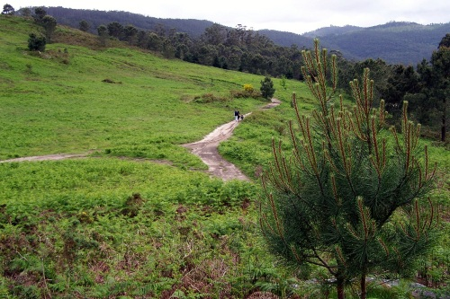 Monte Pituco, Espazo Natural dos Montes do Morrazo.