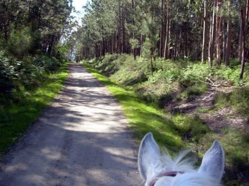 Paseo a cabalo polo Monte Pituco (fotos, Tere Ponce).