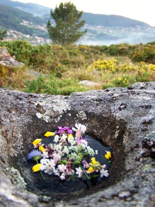 Herbas de San Xoán recollidas no Monte Pituco.