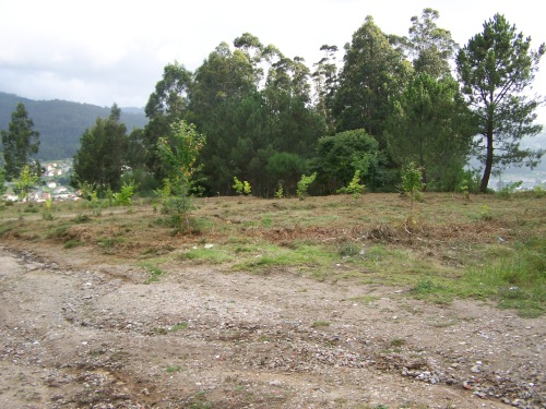 Desbrozada parte da zona afectada polo proxecto de polígono industrial.