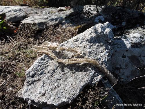 Camisa de serpe (foto, Paulo Troitiño).