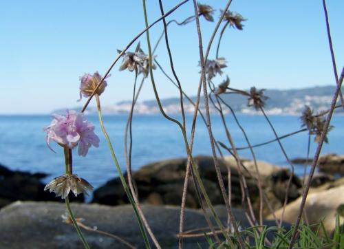 Flora de Tambo.