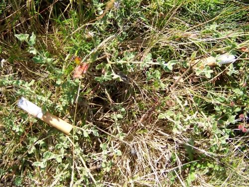 Cabichas tiradas no Monte Pituco. Perigo de incendio!