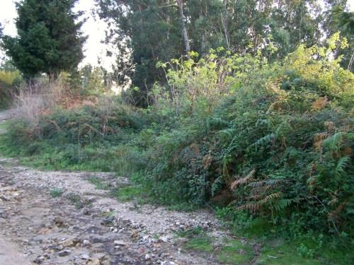 Lamentable estado da pista forestal do Pituco.