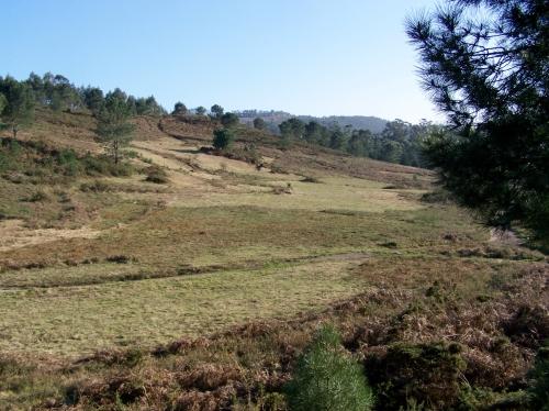 Recollida de herba e fento no Monte Pituco
