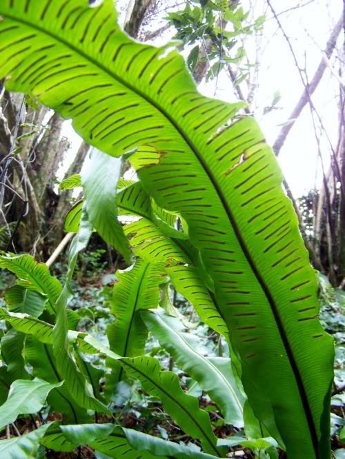 Nos montes de San Tomé de Piñeiro, Marín.