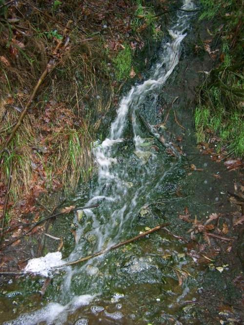 Aguas residuais procedentes -presuntamente- dunha granxa de visóns-