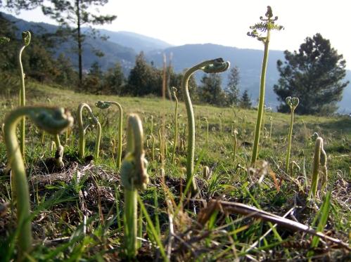 https://montepituco.wordpress.com/flora